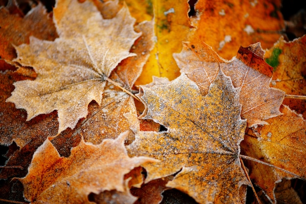 Fim natural congelado do outono acima do colorfull vermelho, verde, folhas amarelas.