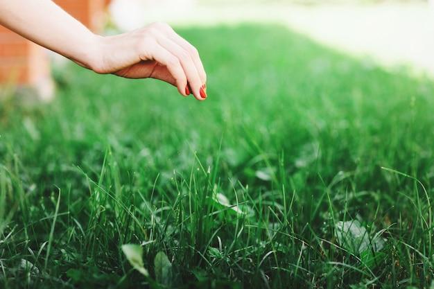 Fim sazonal da grama de plantação acima.