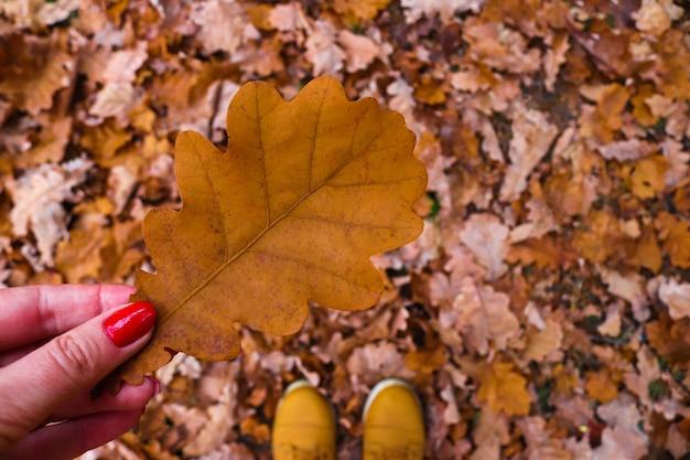 Final do outono, outono, folha de carvalho na mão da mulher contra um fundo de folhagem de outono