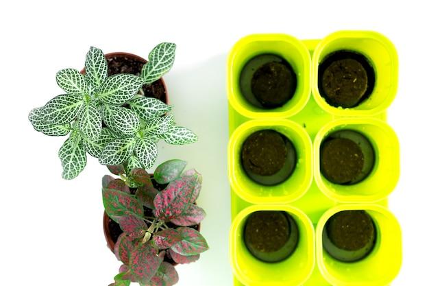Fique em casa e jardine. replante de flores em jardim interno. plantas verdes em vasos em casa, materiais para jardins, selva urbana.