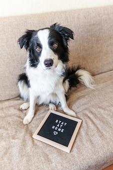 Fique em casa. o retrato engraçado do cachorrinho bonito no sofá com inscrição da placa de letra fica em casa a palavra. novo membro adorável da família cachorrinho em casa dentro de casa. conceito de quarentena de vida animal de cuidados de animais de estimação.
