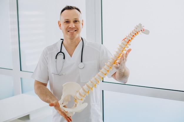 Fisioterapeuta de vértebras segurando coluna artificial