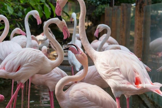 Flamingo na bolívia