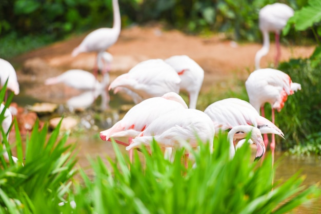 Flamingo pássaro rosa lindo no lago rio natureza animais tropicais