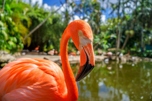 Flamingo rosa contra fundo verde borrado no parque nacional.
