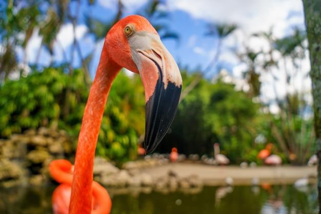 Flamingo rosa no parque nacional.