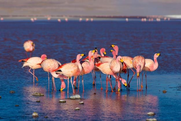 Flamingos cor de rosa na