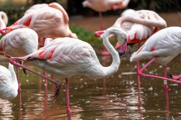 Flamingos cor de rosa no parque nacional no brasil.