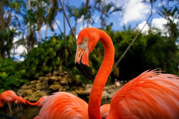 Flamingos cor de rosa no parque nacional.