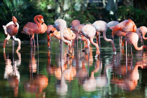Flamingos em pé na água