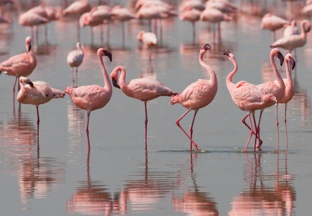Flamingos no lago com reflexo