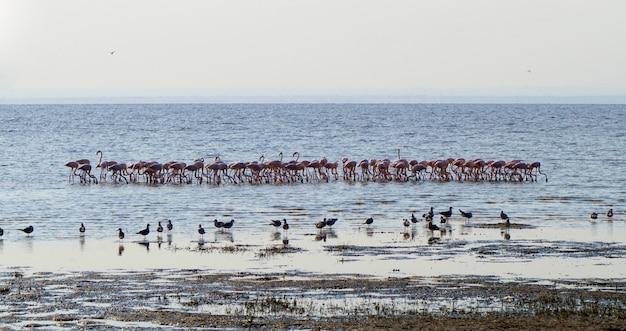 Flamingos no lago manyara - tanzânia