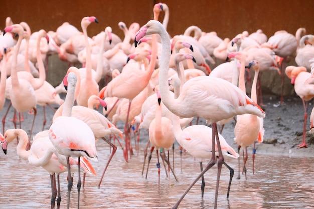 Flamingos parados na água