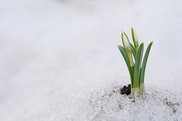 Floco de neve e neve