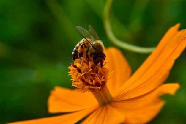 Flor abelha polinizando