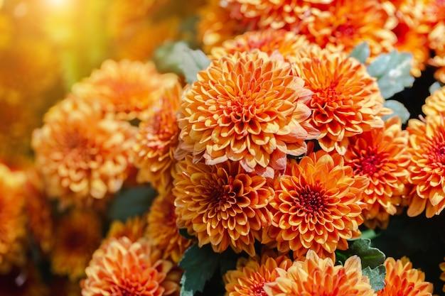 Flor alaranjada no jardim no dia ensolarado do verão ou de mola.