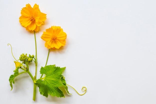 Flor amarela arranjo cosmos estilo cartão postal