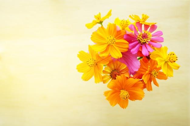 Flor amarela bonita do cosmos no fundo de madeira.