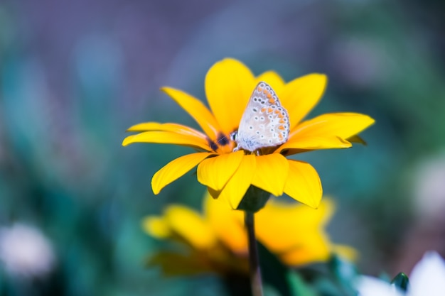Flor amarela com uma buterfly