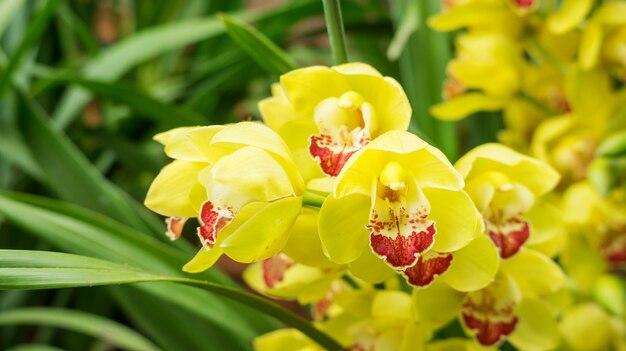 Flor amarela do cymbidium em um jardim.