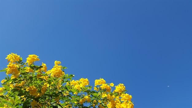 Flor amarela e céu azul claro