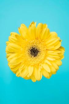 Flor amarela em fundo azul-turquesa