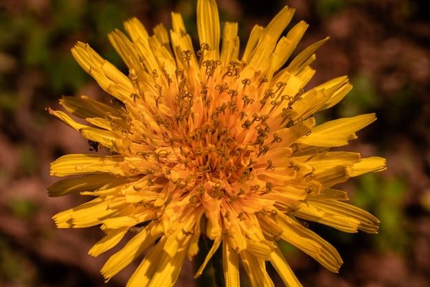 Flor amarela exótica capturada em um jardim