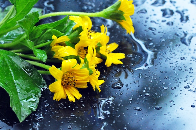 Flor amarela fresca Foto Premium