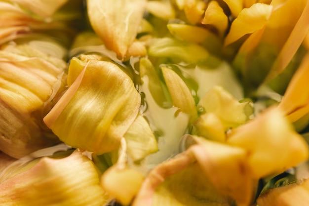 Flor amarela pálida em close-up extremo de água