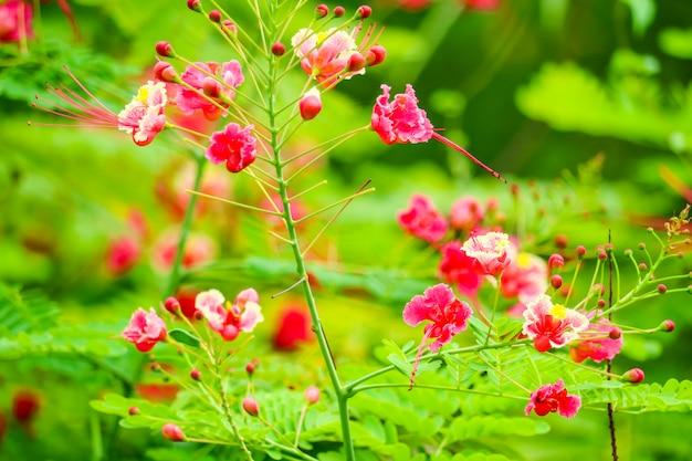 Flor amarela pode ser fervida com água, usada para aliviar a dor de dente