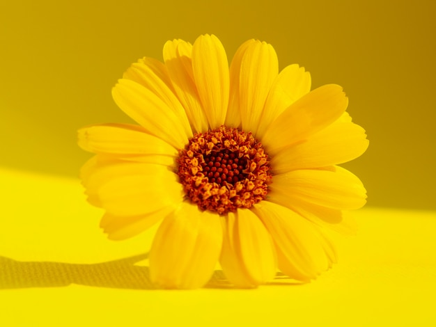 Flor amarela sobre fundo amarelo. fotografia macro.