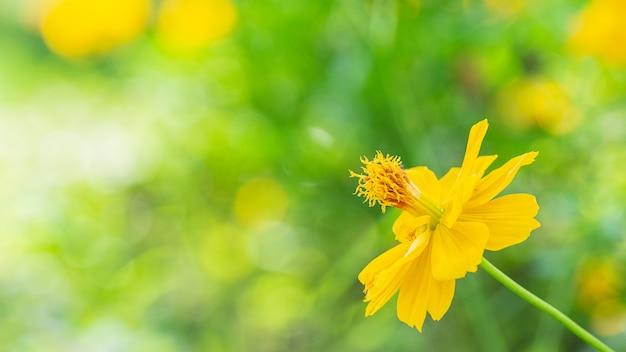 Flor amarela solitária