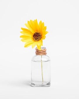 Flor amarela única margarida em frasco de vidro vintage com água