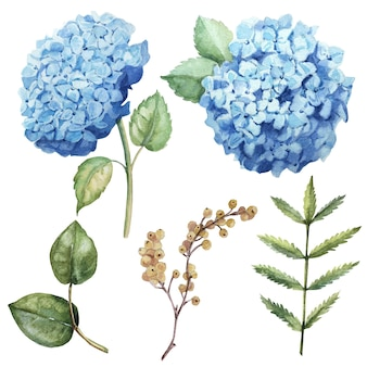 Flor azul aquarela cravejada de folhas, íris, anêmona, ramo