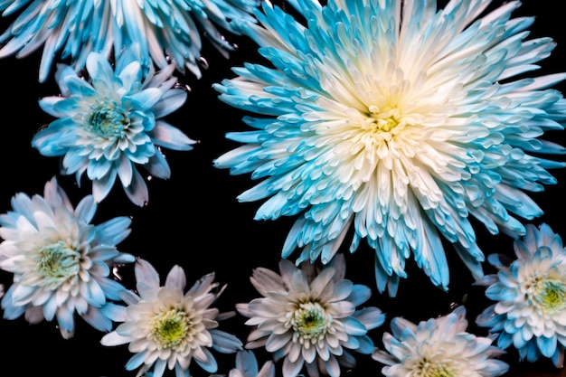Flor azul na tigela
