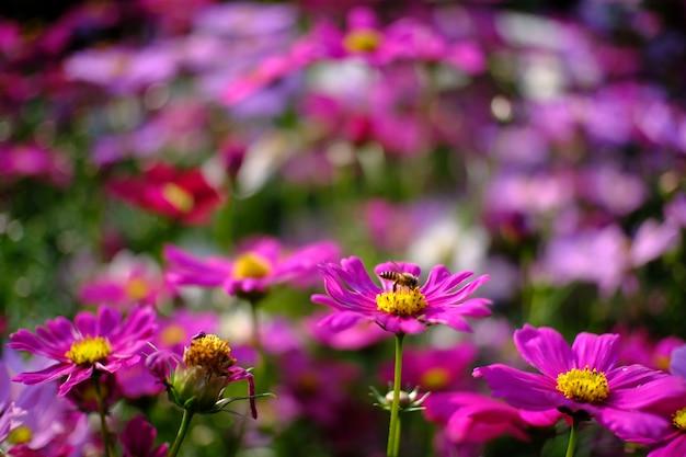Flor bonita da cor-de-rosa da natureza no jardim da natureza.