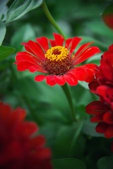 Flor bonita