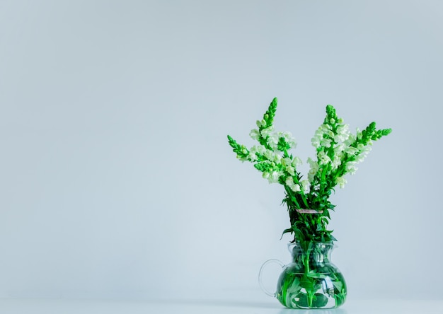 Flor branca de matthiola em um bule de vidro