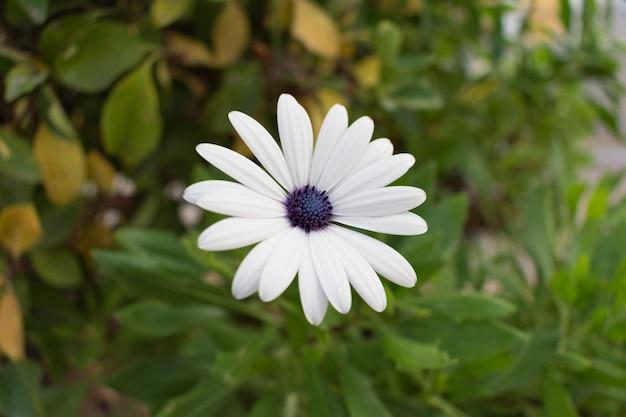 Flor branca e fundo de folhas verdes e marrons