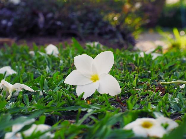 Flor branca e fundo verde da natureza