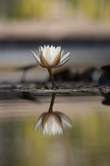 Flor branca e marrom em galho de árvore marrom