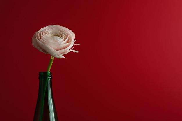 Flor branca e ranúnculo em frasco verde