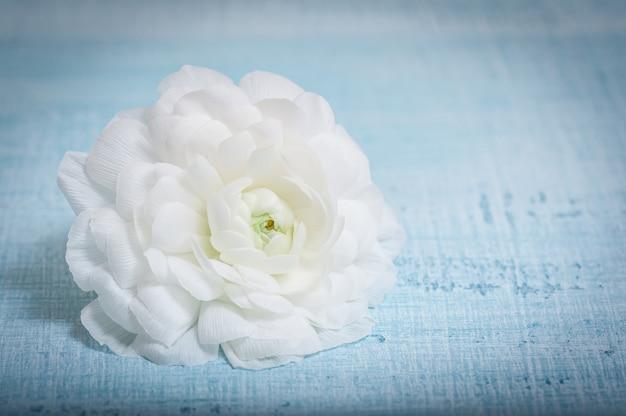 Flor branca em tecido azul claro. flor de ranúnculo.