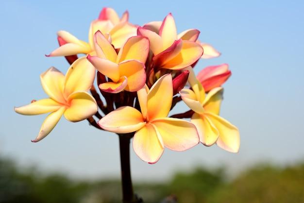 Flor branca. flor amarela ou flor branca