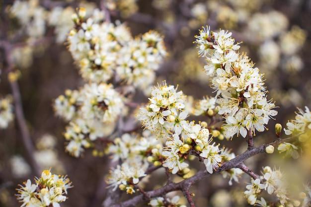 Flor branca no fundo de flores desabrochando de primavera