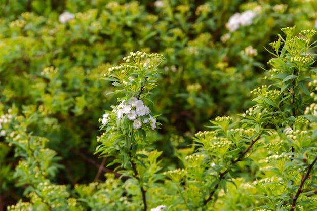 Flor branca no fundo desfocado verde