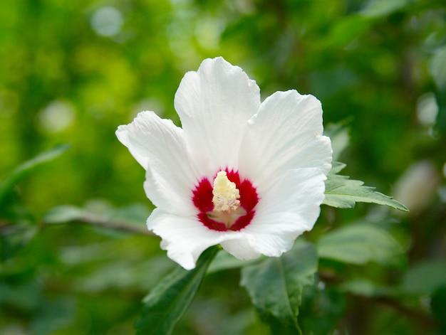 Flor branca no fundo verde.