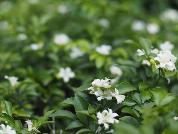 Flor branca pequena com folhas verdes.