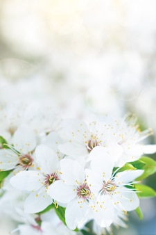 Flor branca primavera