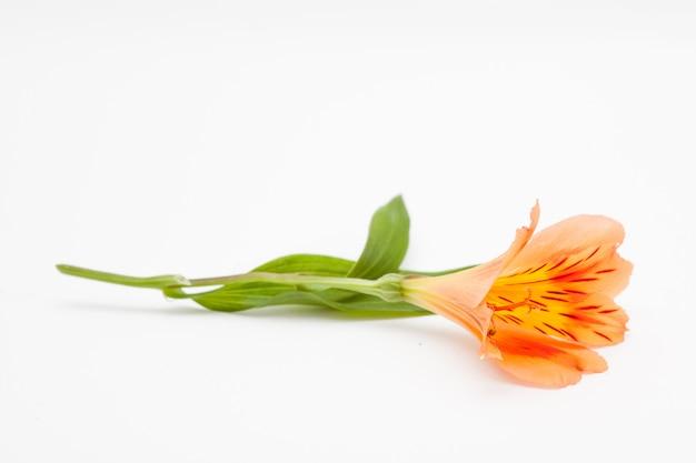 Flor brilhante em branco